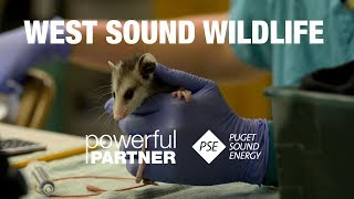 Powerful Partners - West Sound Wildlife